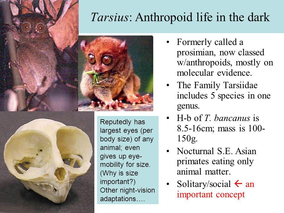 People (Homo sapiens) The most abundant primate species.