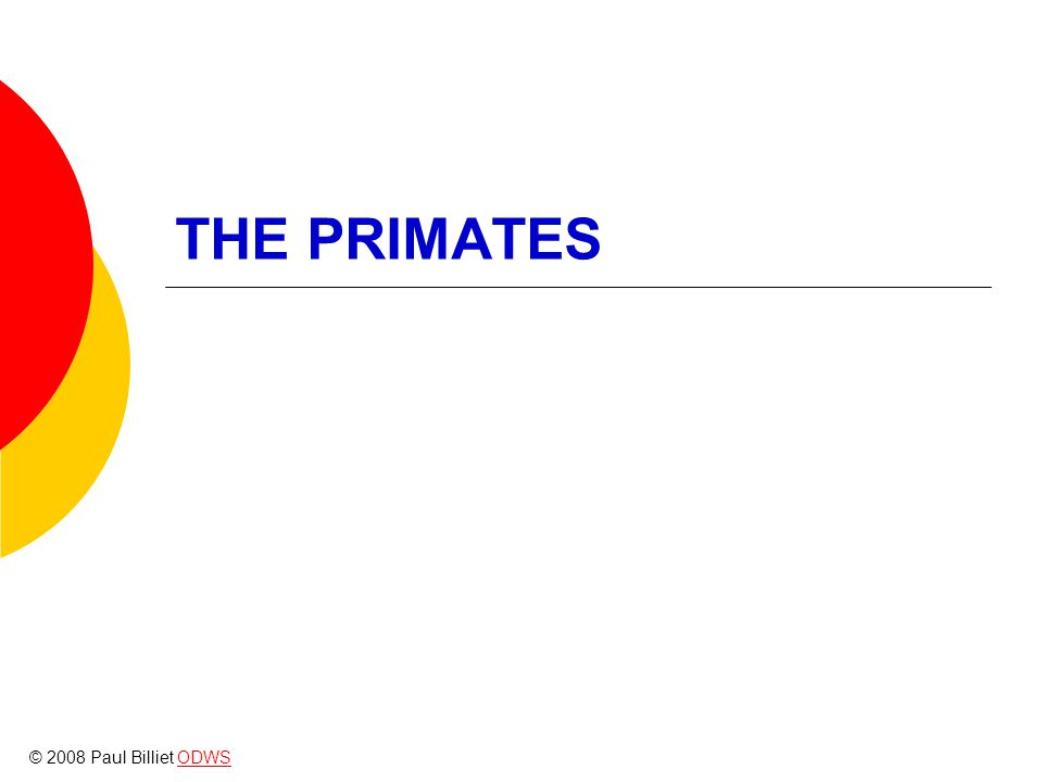 THE PRIMATES © 2008 Paul Billiet ODWSODWS