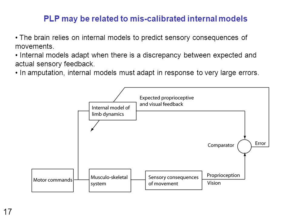17 PLP may be related to mis-calibrated internal models The brain relies on internal models to predict sensory consequences of movements.