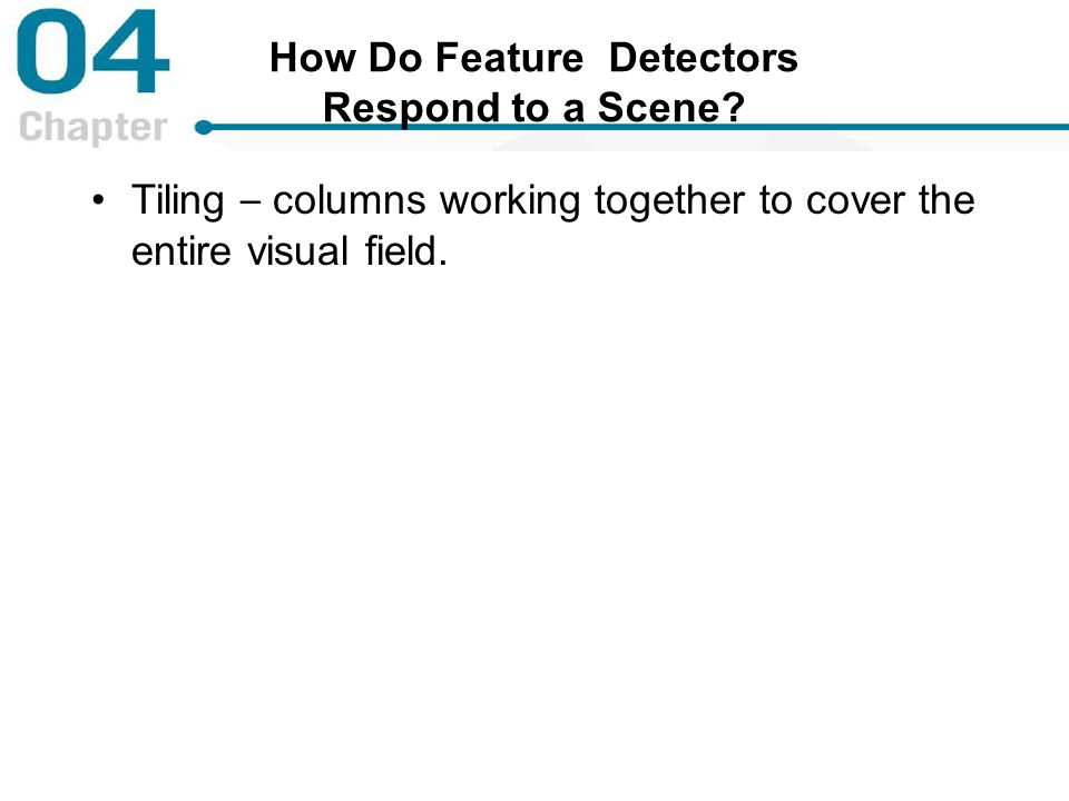 How Do Feature Detectors Respond to a Scene? Tiling – columns working together to cover the entire visual field.