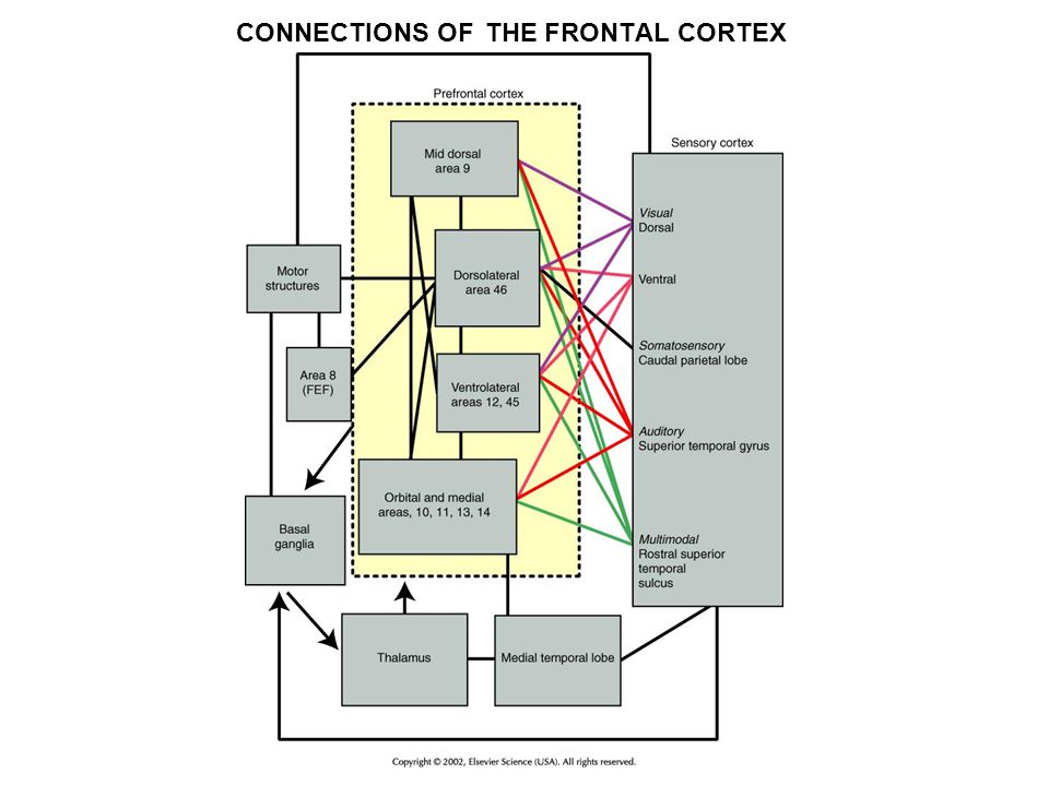 CONNECTIONS OF THE FRONTAL CORTEX