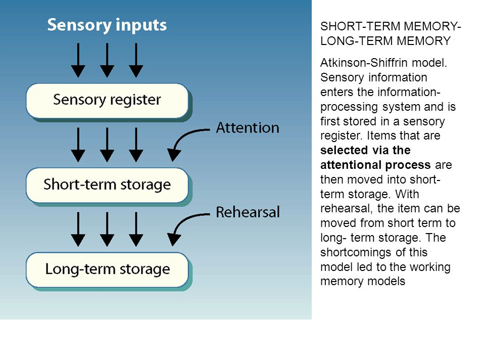 SHORT-TERM MEMORY- LONG-TERM MEMORY Atkinson-Shiffrin model. Sensory information enters the information- processing system and is first stored in a se