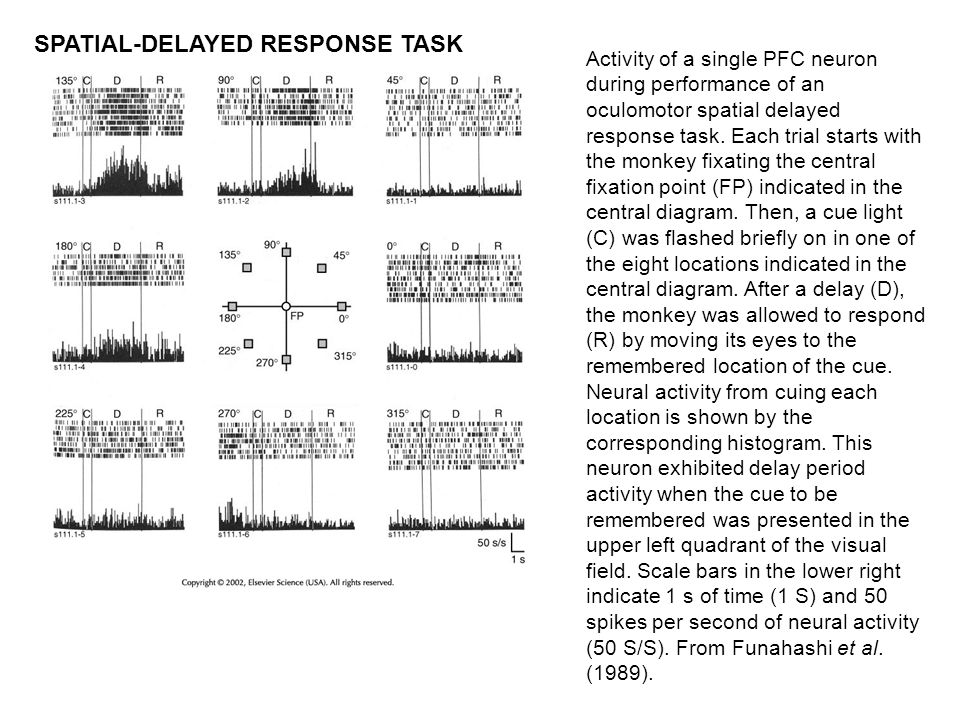 Activity of a single PFC neuron during performance of an oculomotor spatial delayed response task. Each trial starts with the monkey fixating the cent