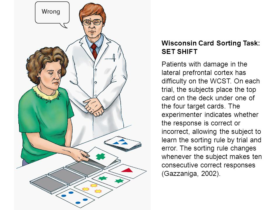 Wisconsin Card Sorting Task: SET SHIFT Patients with damage in the lateral prefrontal cortex has difficulty on the WCST.