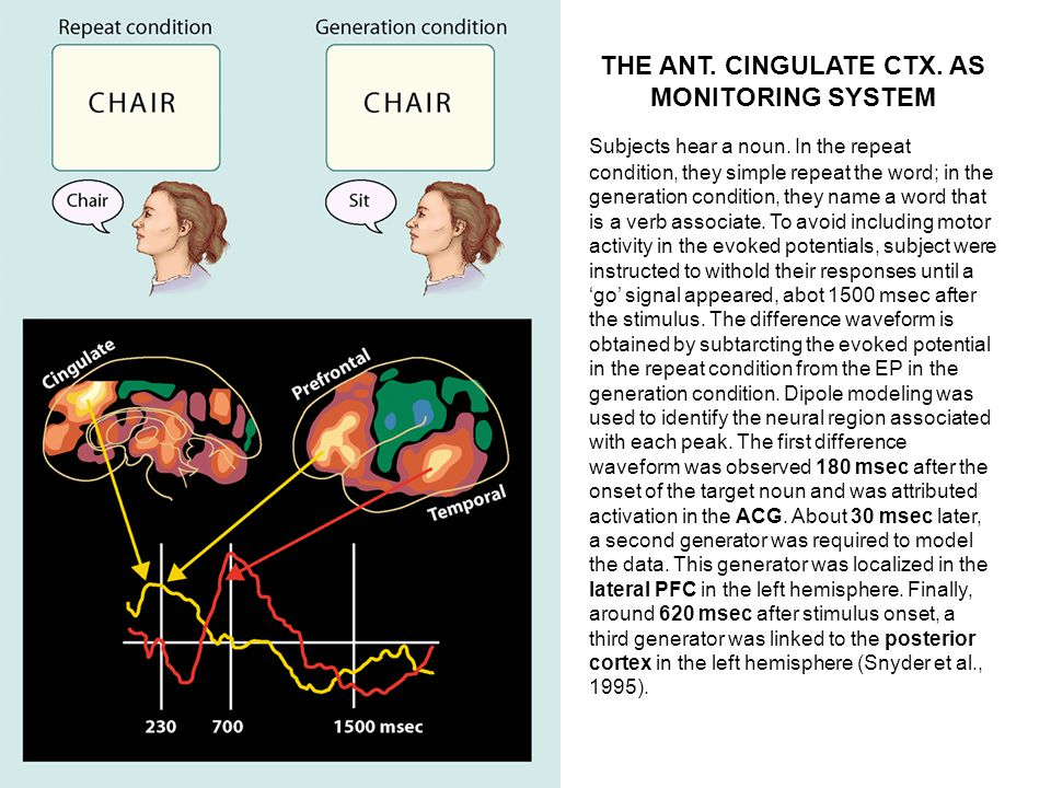THE ANT. CINGULATE CTX. AS MONITORING SYSTEM Subjects hear a noun. In the repeat condition, they simple repeat the word; in the generation condition,