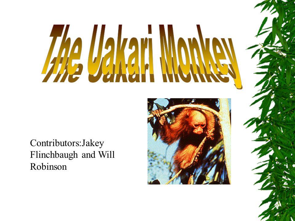 Contributors:Jakey Flinchbaugh and Will Robinson