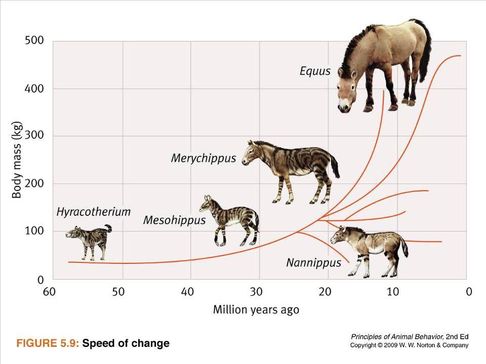 Ayo 2010 Ethology15