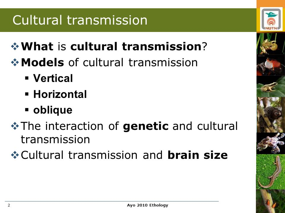 Ayo 2010 Ethology3 What is cultural transmission.