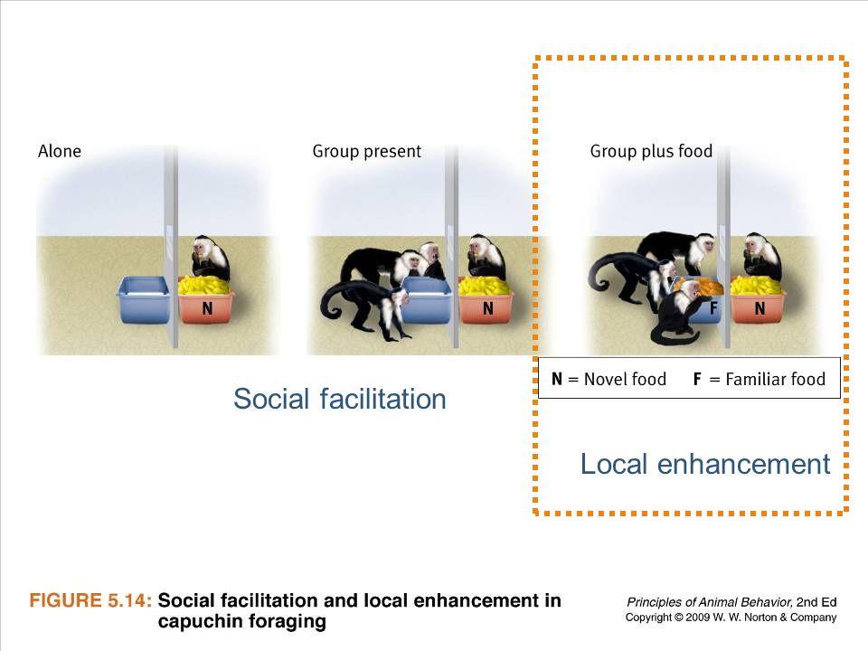 Ayo 2010 Ethology23 Social facilitation Local enhancement