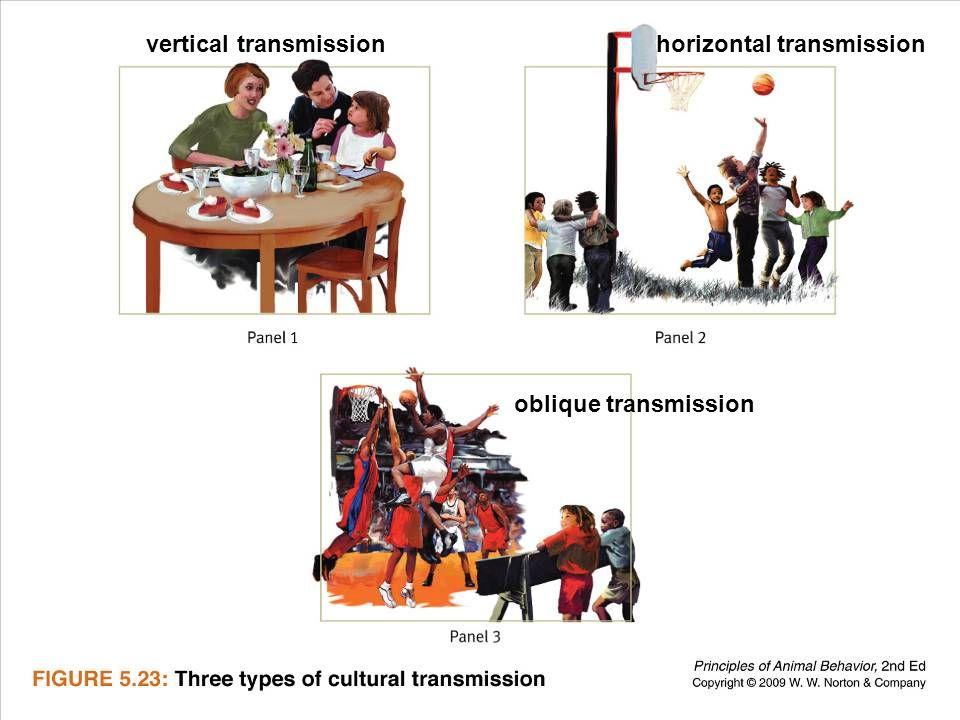 Ayo 2010 Ethology37 vertical transmissionhorizontal transmission oblique transmission