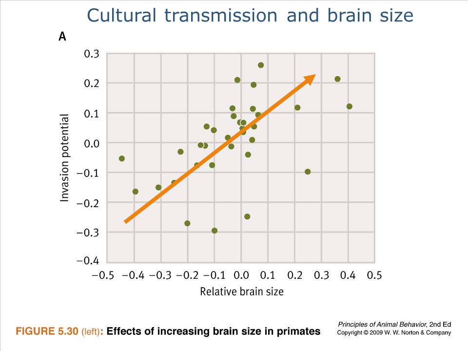 Ayo 2010 Ethology49 Cultural transmission and brain size