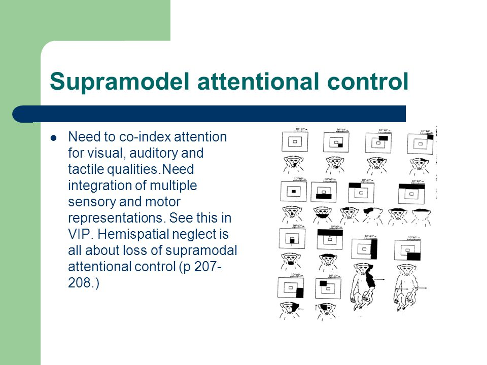 Supramodel attentional control Need to co-index attention for visual, auditory and tactile qualities.Need integration of multiple sensory and motor representations.