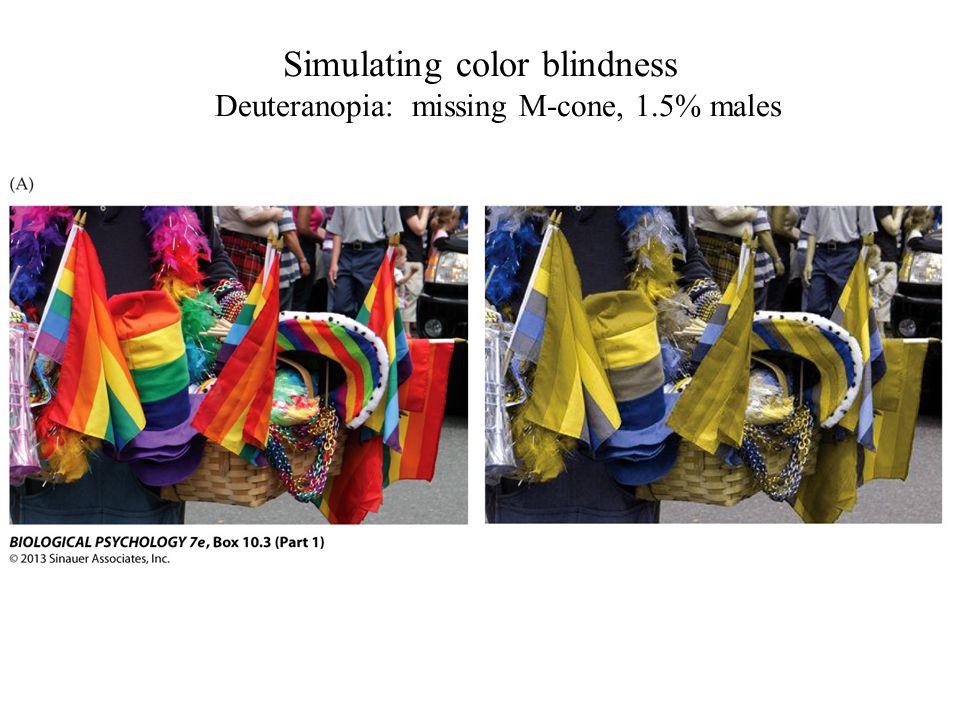 Simulating color blindness Deuteranopia: missing M-cone, 1.5% males