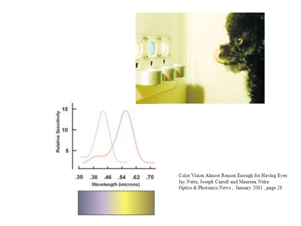 Color Vision Almost Reason Enough for Having Eyes Jay Neitz, Joseph Carroll and Maureen Neitz Optics & Photonics News, January 2001, page 28