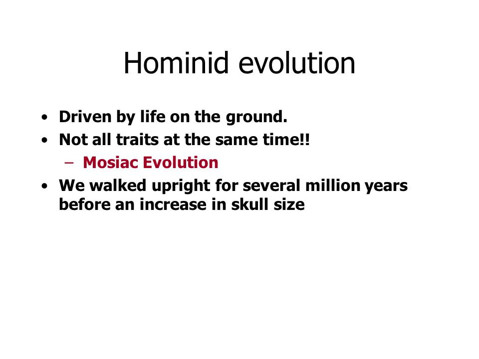 Hominid evolution Driven by life on the ground. Not all traits at the same time!! –Mosiac Evolution We walked upright for several million years before