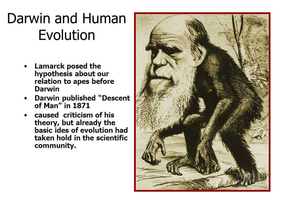 "Darwin and Human Evolution Lamarck posed the hypothesis about our relation to apes before Darwin Darwin published ""Descent of Man"" in 1871 caused crit"