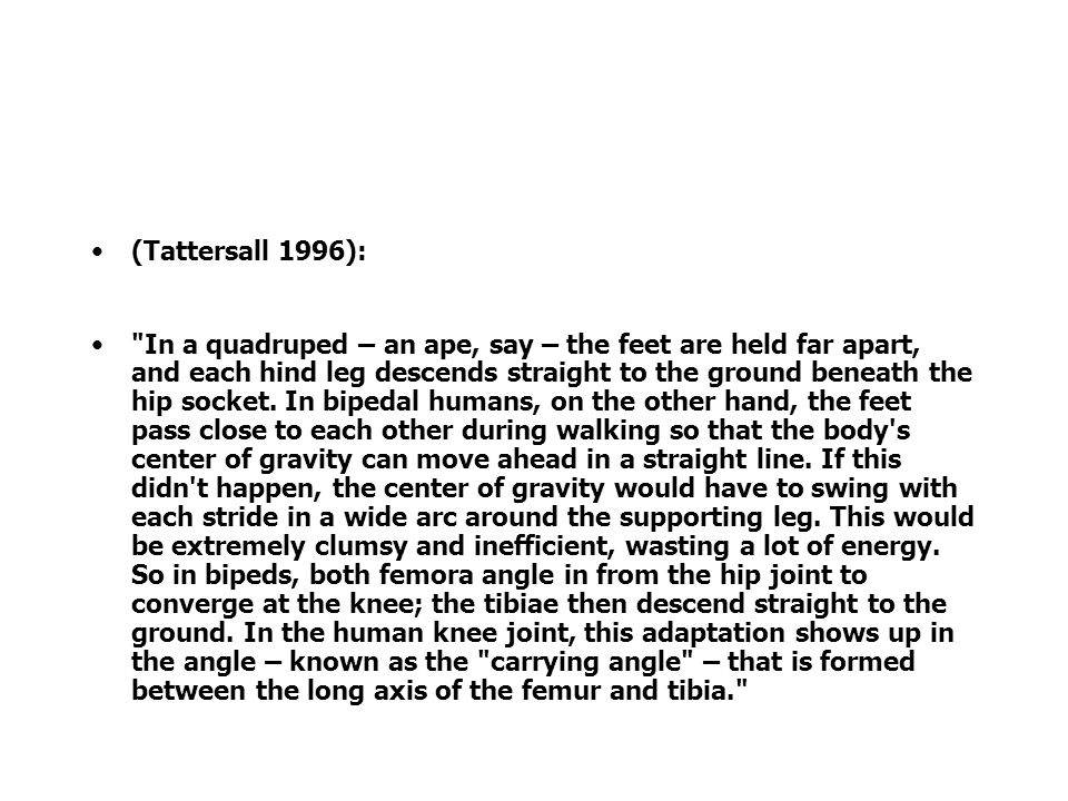 (Tattersall 1996): In a quadruped – an ape, say – the feet are held far apart, and each hind leg descends straight to the ground beneath the hip socket.