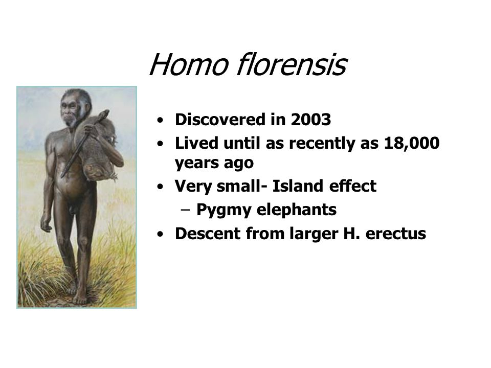 Homo florensis Discovered in 2003 Lived until as recently as 18,000 years ago Very small- Island effect –Pygmy elephants Descent from larger H. erectu