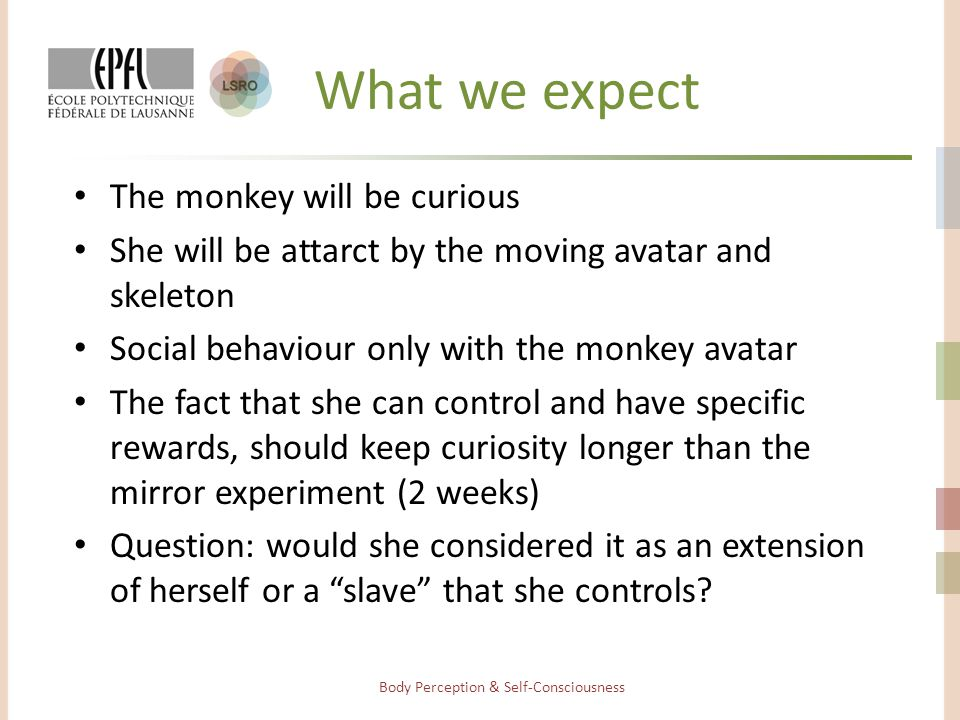 What we expect The monkey will be curious She will be attarct by the moving avatar and skeleton Social behaviour only with the monkey avatar The fact that she can control and have specific rewards, should keep curiosity longer than the mirror experiment (2 weeks) Question: would she considered it as an extension of herself or a slave that she controls.