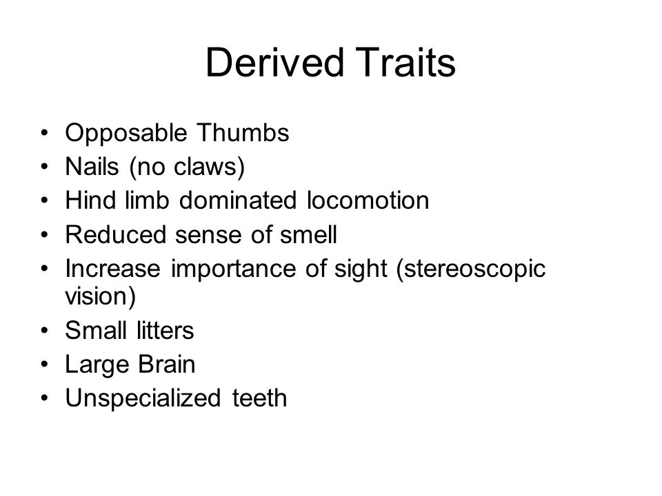 Derived Traits Opposable Thumbs Nails (no claws) Hind limb dominated locomotion Reduced sense of smell Increase importance of sight (stereoscopic vision) Small litters Large Brain Unspecialized teeth