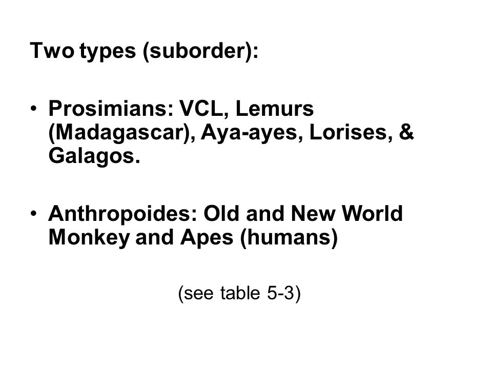 Two types (suborder): Prosimians: VCL, Lemurs (Madagascar), Aya-ayes, Lorises, & Galagos. Anthropoides: Old and New World Monkey and Apes (humans) (se