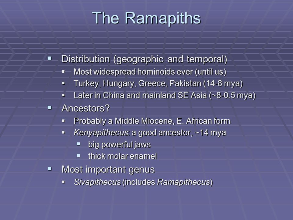 The Ramapiths  Distribution (geographic and temporal)  Most widespread hominoids ever (until us)  Turkey, Hungary, Greece, Pakistan (14-8 mya)  La