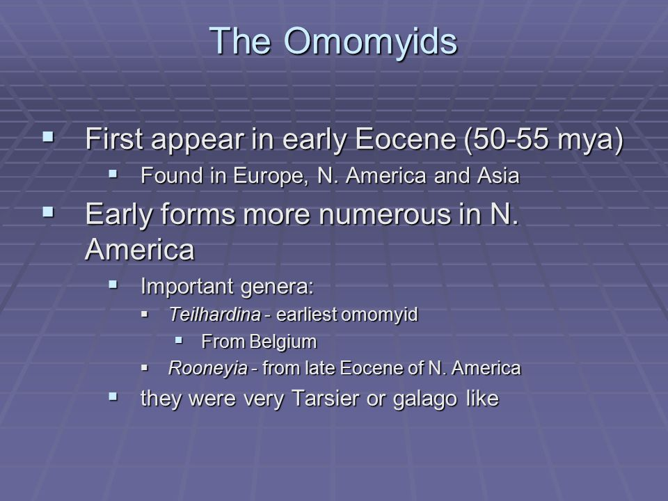 The Omomyids  First appear in early Eocene (50-55 mya)  Found in Europe, N. America and Asia  Early forms more numerous in N. America  Important g