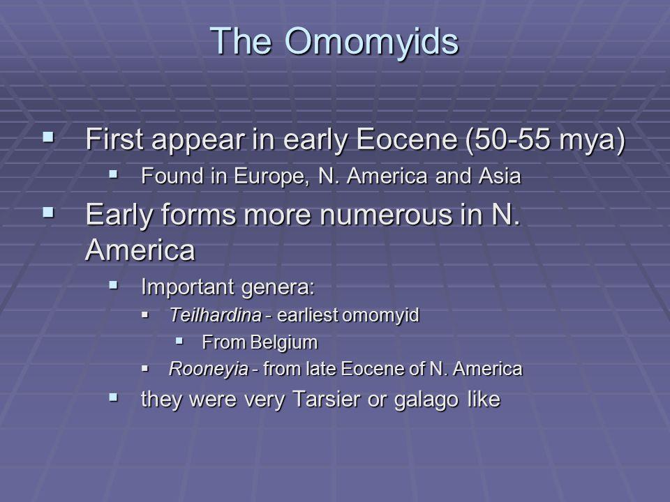 Adapids vs. Omomyids