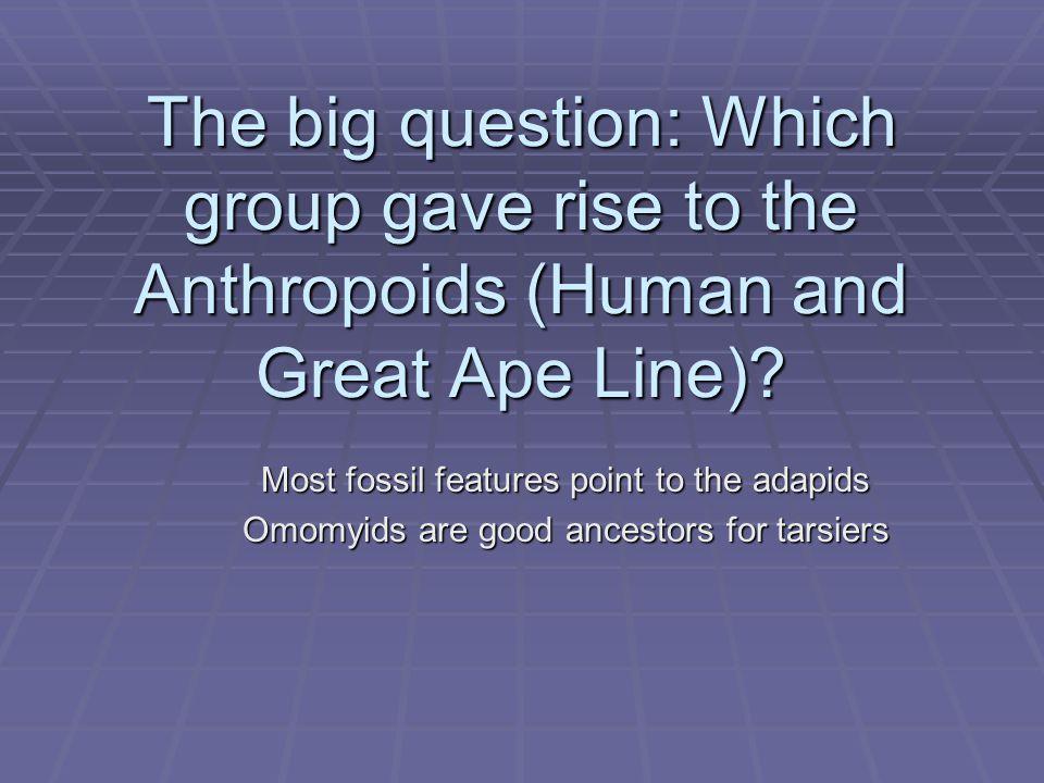 The Oligocene epoch (35-25 mya) - the first Anthropoids  The Fayum depression - Egypt, 60 mi.