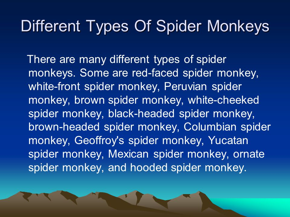Different Types Of Spider Monkeys There are many different types of spider monkeys. Some are red-faced spider monkey, white-front spider monkey, Peruv