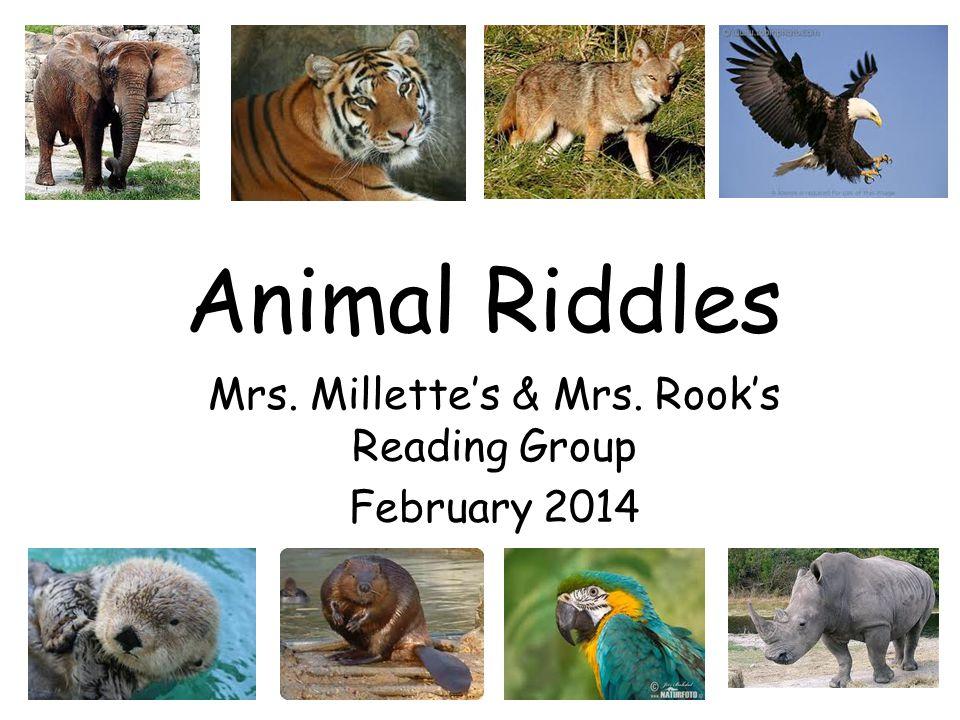 Mimi's Animal Riddle I am black and orangish yellow.