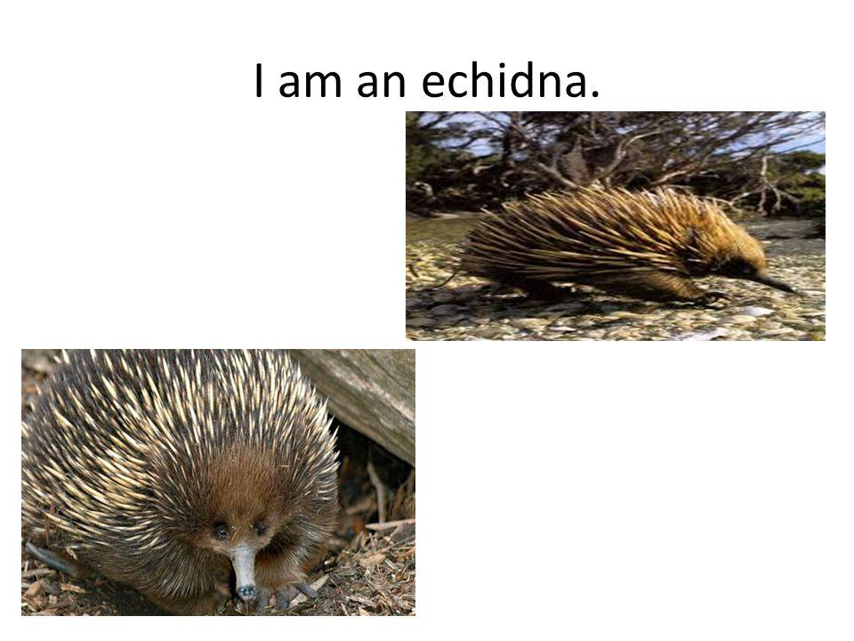Naishia's Animal Riddle I am a mammal.My fur is white like snow.