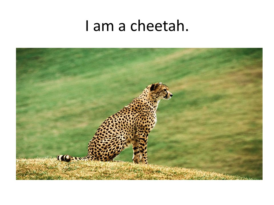 Jo'sya's Animal Riddle I am an animal that lives in Africa.