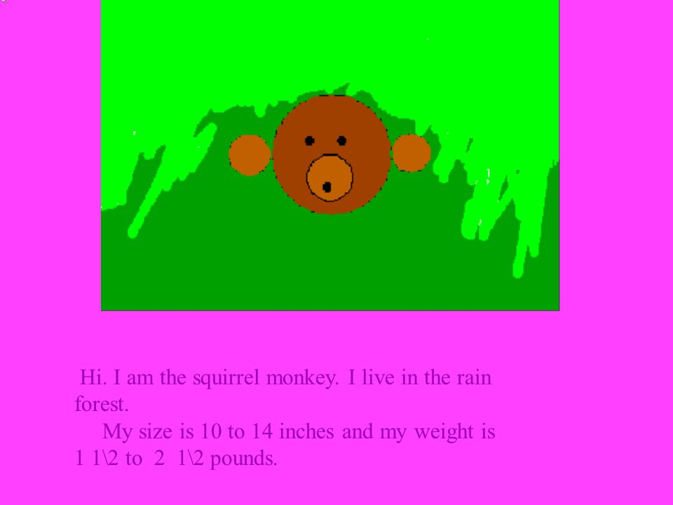 Hi. I am the squirrel monkey. I live in the rain forest. My size is 10 to 14 inches and my weight is 1 1\2 to 2 1\2 pounds.
