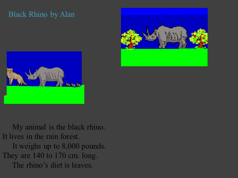 Black Rhino by Alan My animal is the black rhino. It lives in the rain forest. It weighs up to 8,000 pounds. They are 140 to 170 cm. long. The rhino's