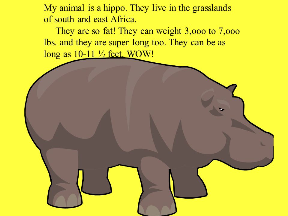 My animal is a hippo. They live in the grasslands of south and east Africa. They are so fat! They can weight 3,ooo to 7,ooo lbs. and they are super lo