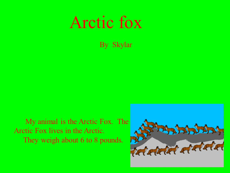 Arctic fox My animal is the Arctic Fox. The Arctic Fox lives in the Arctic. They weigh about 6 to 8 pounds. By Skylar