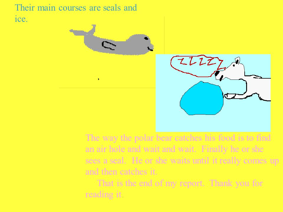 Their main courses are seals and ice. The way the polar bear catches his food is to find an air hole and wait and wait. Finally he or she sees a seal.