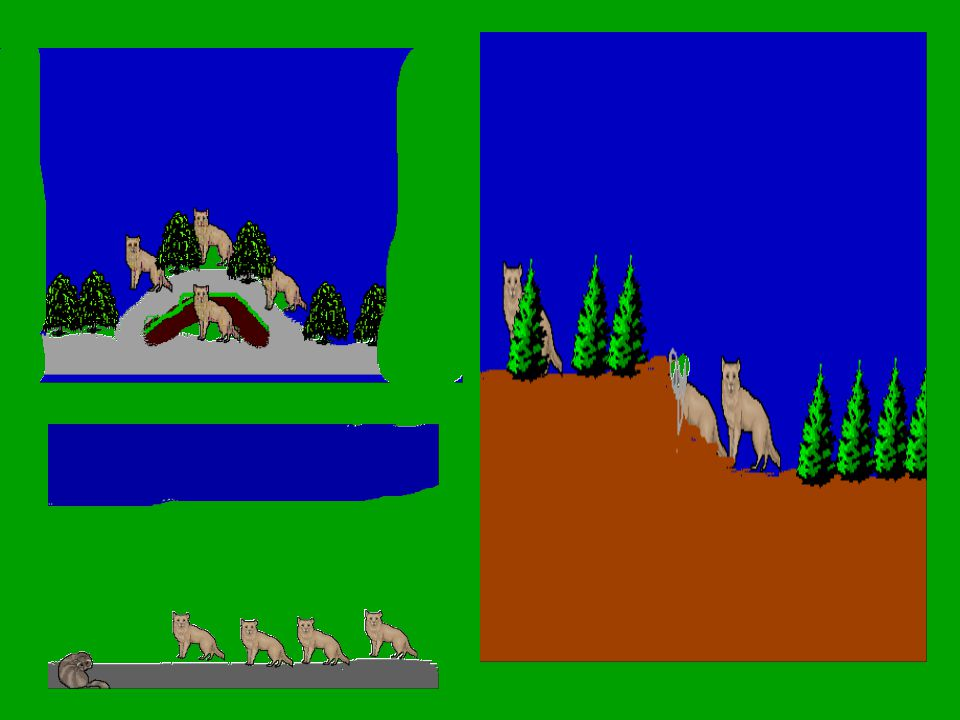 Arctic fox My animal is the Arctic Fox.The Arctic Fox lives in the Arctic.