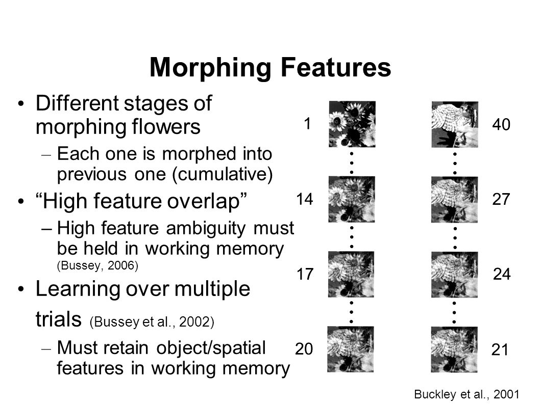 """Morphing Features Different stages of morphing flowers – Each one is morphed into previous one (cumulative) """"High feature overlap"""" –High feature ambig"""