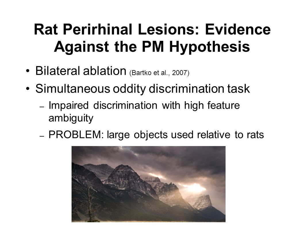 Rat Perirhinal Lesions: Evidence Against the PM Hypothesis Bilateral ablation (Bartko et al., 2007) Simultaneous oddity discrimination task – Impaired discrimination with high feature ambiguity – PROBLEM: large objects used relative to rats