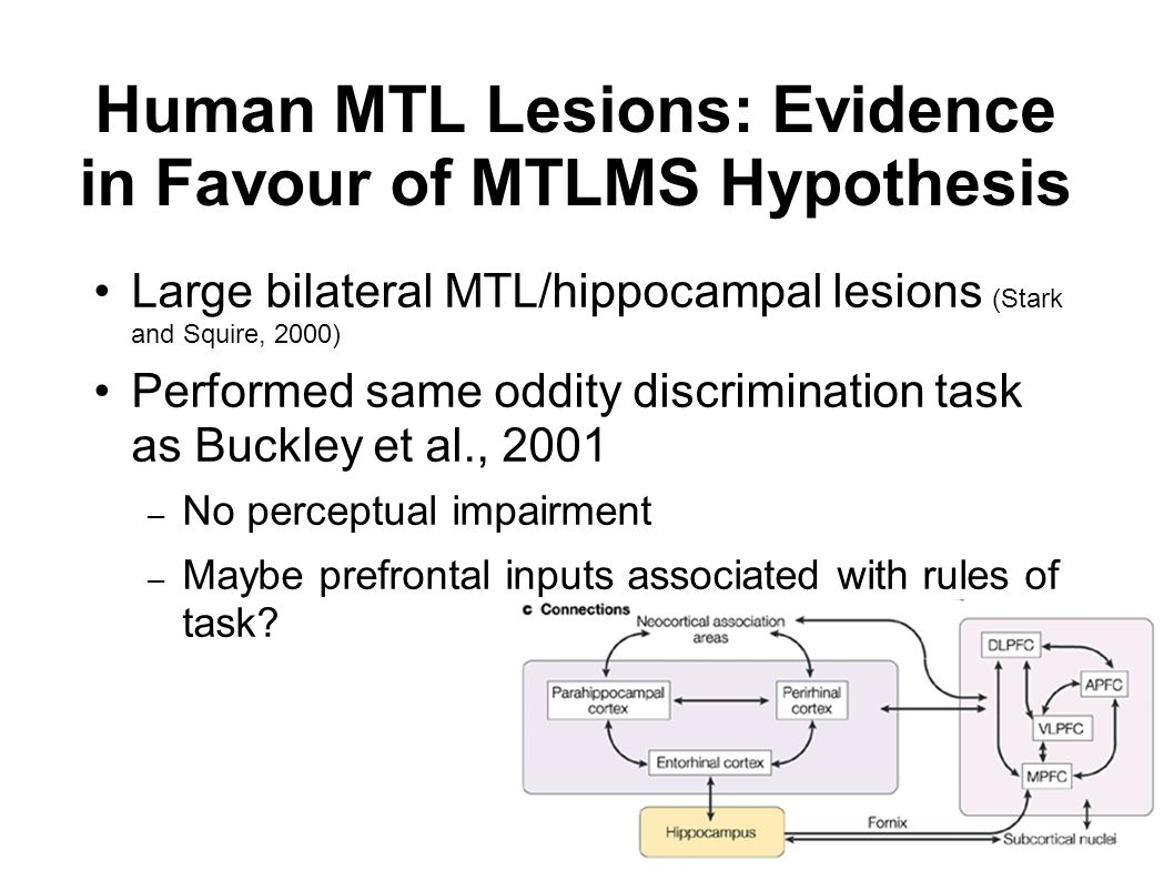 Human MTL Lesions: Evidence in Favour of MTLMS Hypothesis Large bilateral MTL/hippocampal lesions (Stark and Squire, 2000) Performed same oddity discrimination task as Buckley et al., 2001 – No perceptual impairment – Maybe prefrontal inputs associated with rules of task?