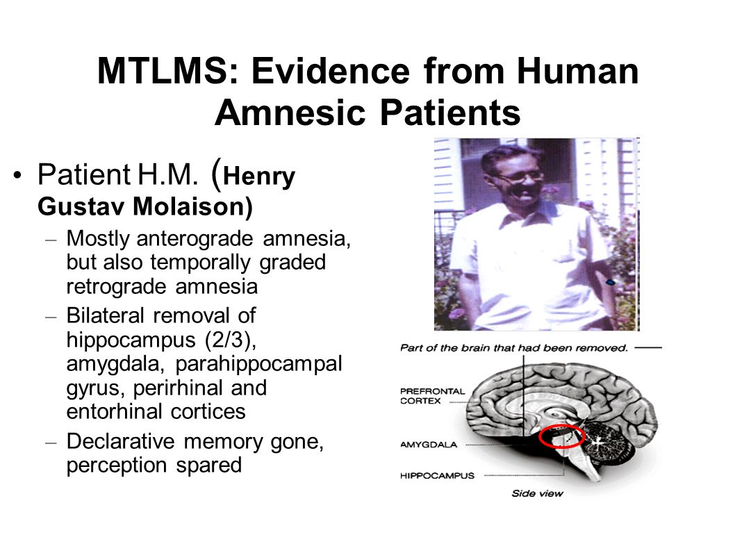 MTLMS: Evidence from Human Amnesic Patients Patient H.M. ( Henry Gustav Molaison) – Mostly anterograde amnesia, but also temporally graded retrograde