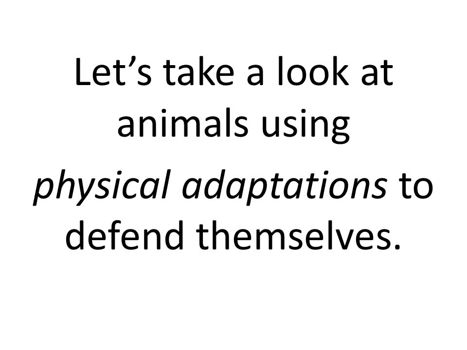 Let's take a look at animals using physical adaptations to defend themselves.