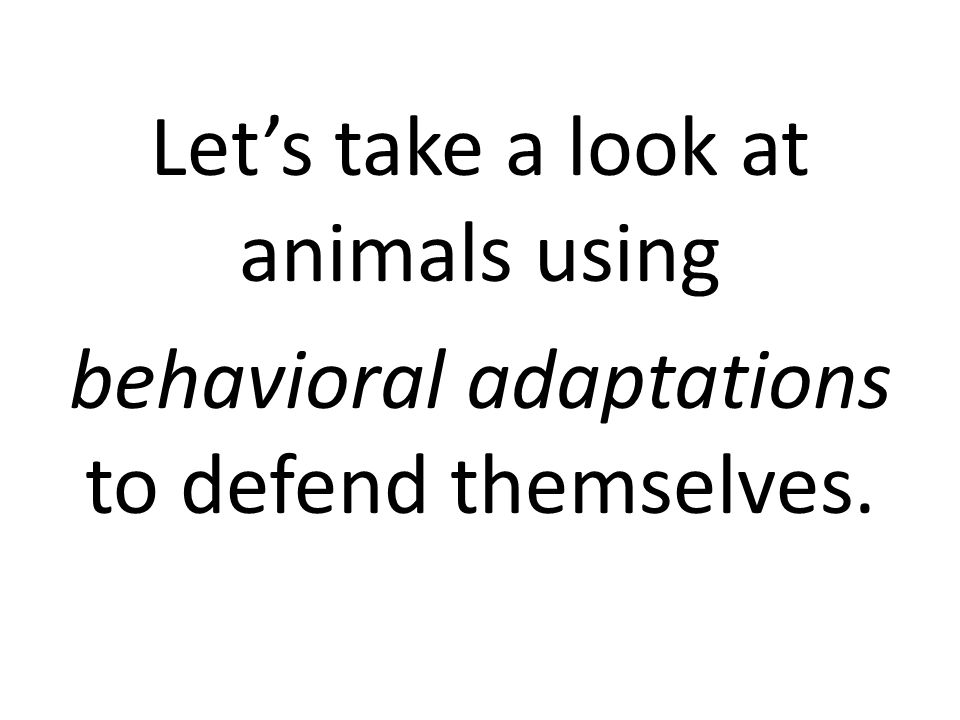 Let's take a look at animals using behavioral adaptations to defend themselves.