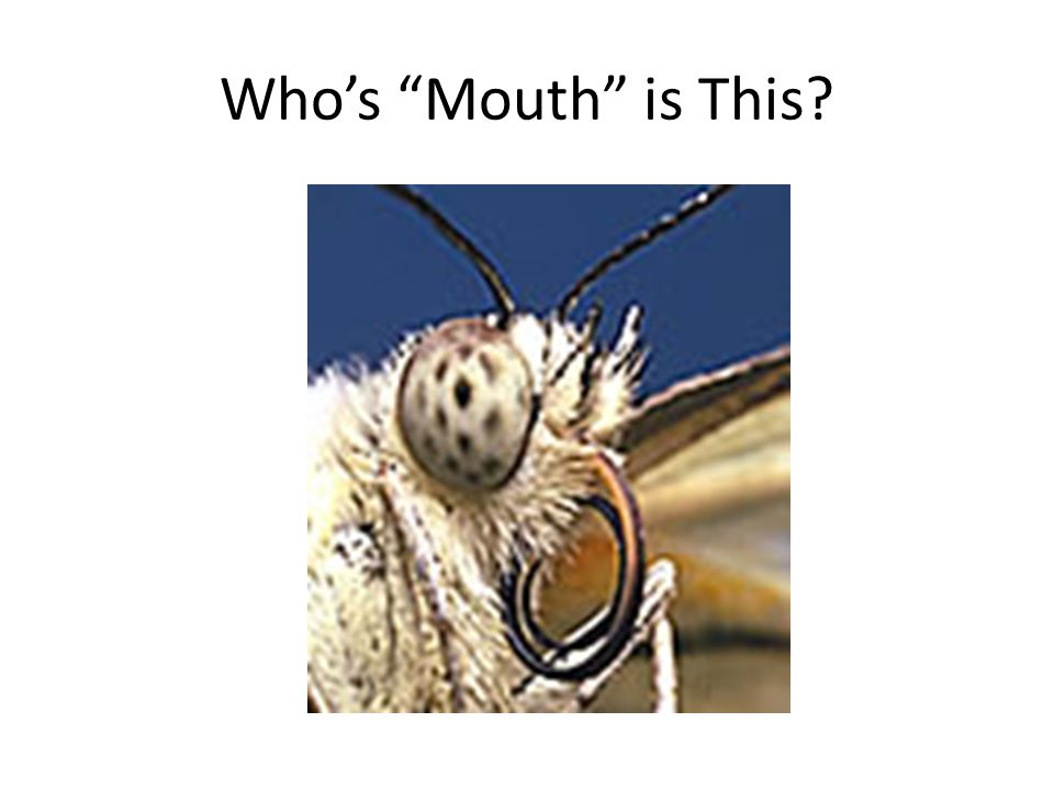 "Who's ""Mouth"" is This?"