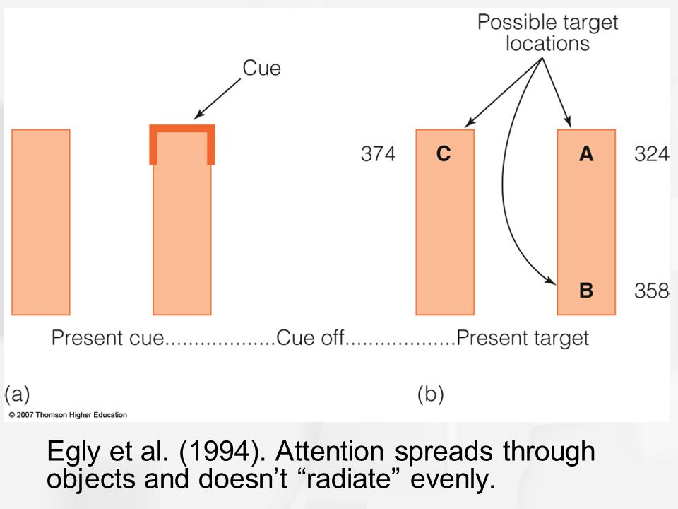 Egly et al. (1994). Attention spreads through objects and doesn't radiate evenly.