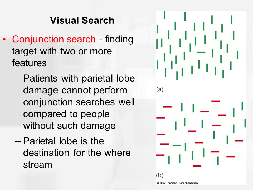 Visual Search Conjunction search - finding target with two or more features –Patients with parietal lobe damage cannot perform conjunction searches well compared to people without such damage –Parietal lobe is the destination for the where stream