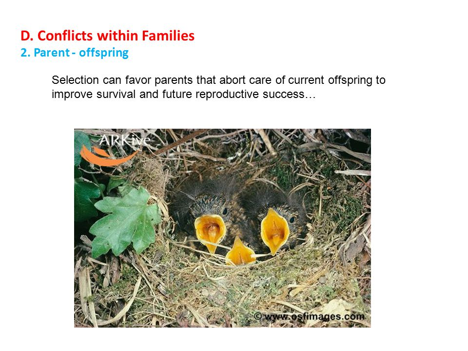 D. Conflicts within Families 2.