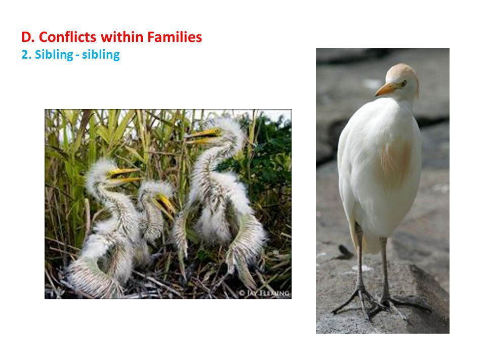 D. Conflicts within Families 2. Sibling - sibling